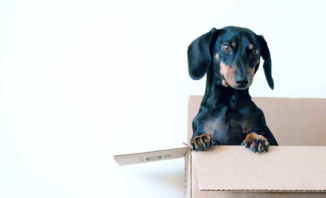 Packing Tips for a Stress-free Move